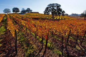 auburn ca winery