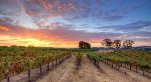 Root 49 Vineyard Best Wine