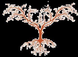 Root 49 wine tree