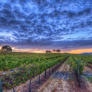 Wineries near Auburn